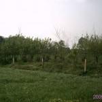 Wallhecken_anpflanzung